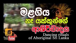 """Kirikoraha"" Rituals dancing of Aboriginal Sri Lanka-  ආදිවාසී කිරිකොරහා ශාන්තිකර්ම&#3514"
