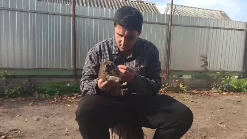 Эльдар Богунов дает витаминки котику