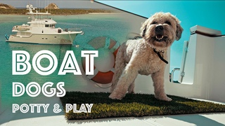 DOGS ON A BOAT! #42 How dogs go to the bathroom and play on our Nordhavn 55 yacht!