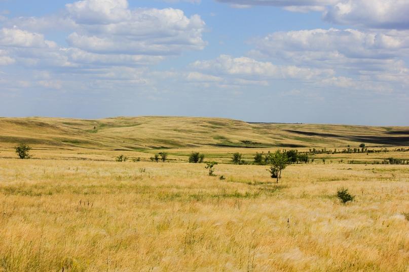 Экспедиционная оценка эффективности землепользования в Оренбуржье, изображение №10