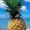 Типичный ананас