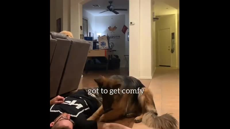 Pup saves owner