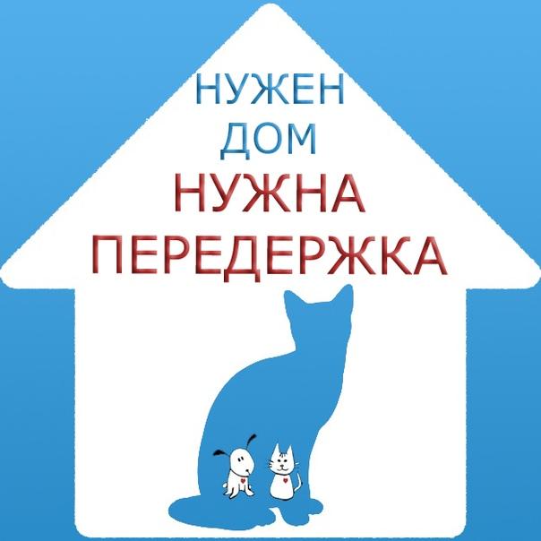 Поздравления никелевой, картинки котенку нужен дом или передержка