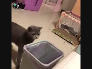 Подборка неуклюжих животных