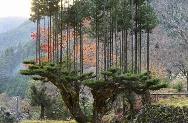 Заготовить пиломатериалы без вырубки леса реально Еще как