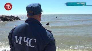 Безопасность отдыхающих на побережье Азовского моря