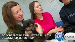 Волонтерство в обществе защиты бездомных животных