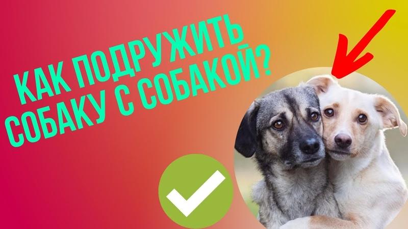 Как подружить собаку с собакой и избежать конфликтов Вторая собака в доме