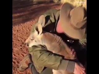 Любовь, Между Людьми и Животными 😁