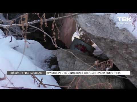 Красноярец разоряет будки бездомных собак в Покровке