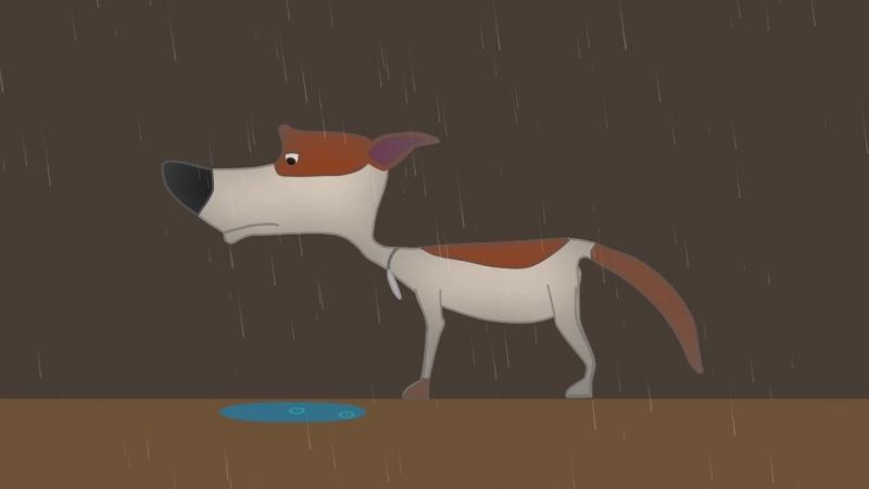Одинокая Стрелка под дождём 🔇