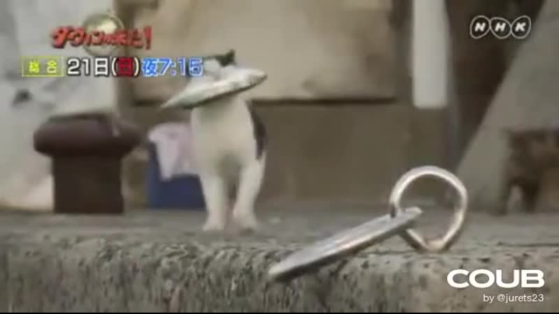 Snatch Cat edition