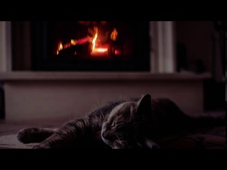 The cat sleeps in front of the fireplace to the sound of the rain. Кот перед камином под шум дождя