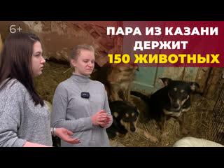 Мини-приют для бездомных животных: как две хрупкие девушки спасли более 150 кошек и собак