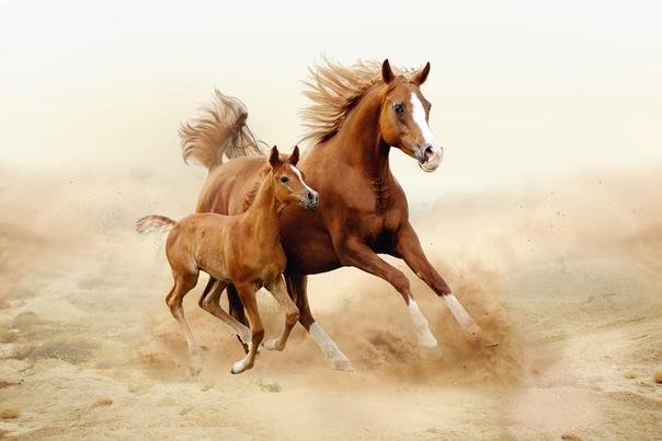 Обои На Телефон Лошади