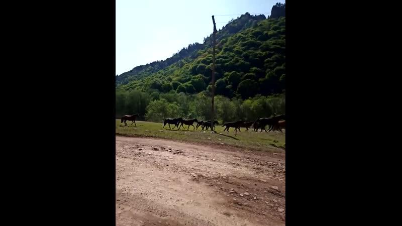 Лошади в Аксауте