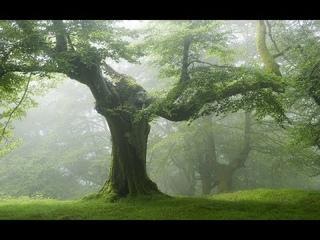 Магические свойства деревьев. Уроки колдовства #87