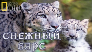 Холодное королевство снежного Барса. #Документальный фильм. National Geographic 12+ HD