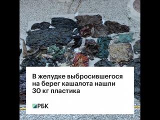 В желудке выбросившегося на берег кашалота нашли 30 кг пластика