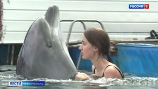 Руководство дельфинария намерено продолжать представления в Артбухте Севастополя