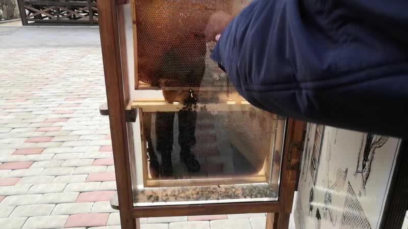 Абхазия Январь 2021 Медовый дворик Введение в пчеловодство 🐝😉🐝
