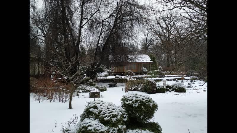 Ботанический сад Петра Великого 02 01 2021