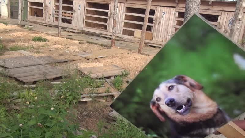 2020 08 15 Город Собак Приют животных Право на жизнь