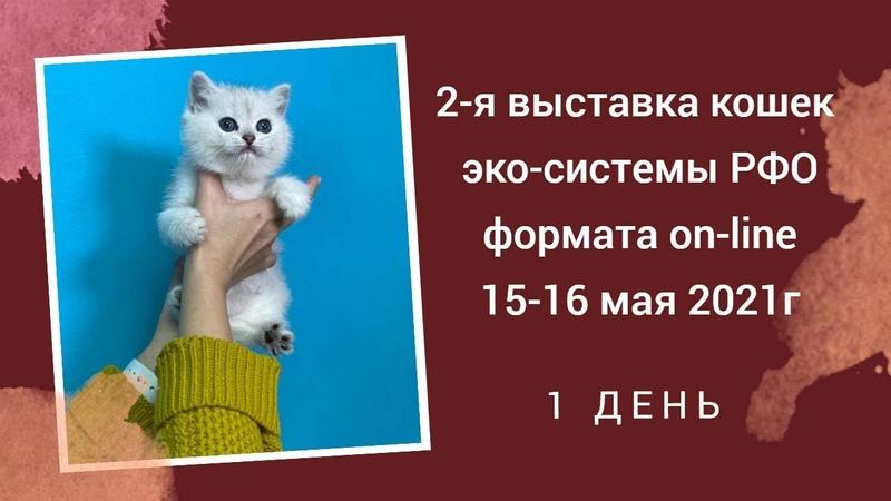 Выставка породистых кошек РФО 15 16 05 2021г день 1