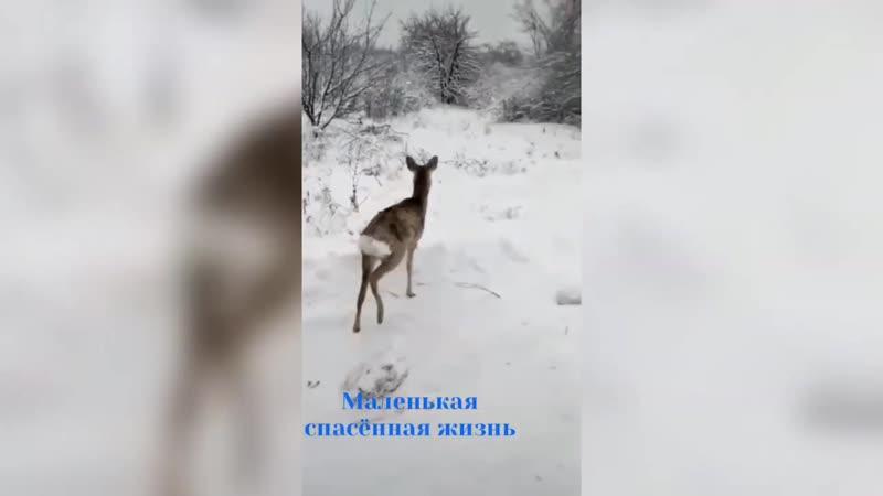Волгоградские МЧС ники спасли косулю