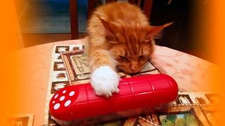Мейн кун Степа и кот Тихон. Когда не понимаешь зачем люди едят колбасу
