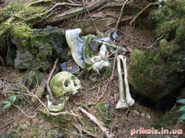 Лес Аокигахара, Япония Мрачный лес у подножия горы Фудзи сгодился бы для съемок «Ведьмы из Блэр». Через густые деревья национального парка почти не пробивается солнце, у людей здесь перестают