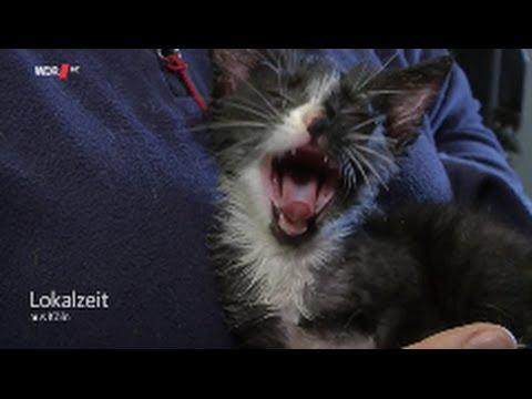 Kleine Katze mit Klebstoff übergossen Einfach schrecklich