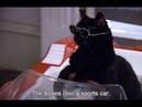 Кот Сэйлем - лучшие моменты | Сабрина маленькая ведьма