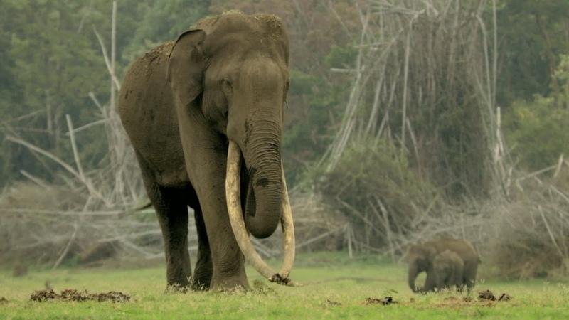 Ricky Kej - Kudrat - GRAMMY® WINNER - Hariharan - Elephant Song