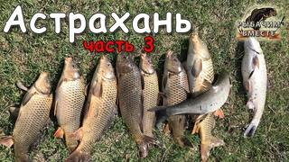 Рыбалка в Астрахани. Готовим САЗАНА, итоги рыбалки. Часть 3