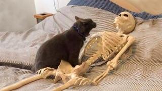 ПРИКОЛЫ С ЖИВОТНЫМИ 😺🐶 Смешные Животные Собаки Смешные Коты Приколы с котами Забавные Животные #7