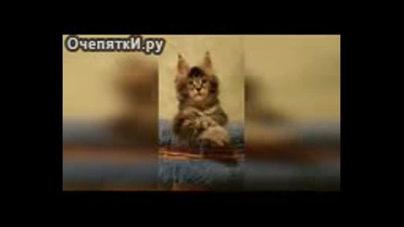 Весёленькие кошки, коты и котята