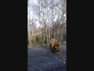 Люди кормят дикого медведя хлебом
