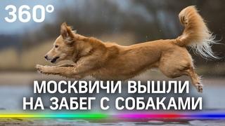 Шпиц, пекинес или терьер - кто быстрее? Москвичи вышли на забег с собаками