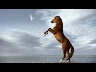 Hermes! лошади это моя любовь навсегда!