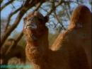 BBC Дикая Австралазия Сердце пустыни Документальный 2003