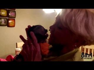 Обезьяна капуцин очень рада видеть бабушку неделю спустя / Capuchin monkey is very happy to see grandmother a week later