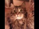 Смешные Прикольные Кошки 11