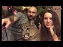 Пума Месси История нашего знакомства Cougar Messi The story of our acquaintance