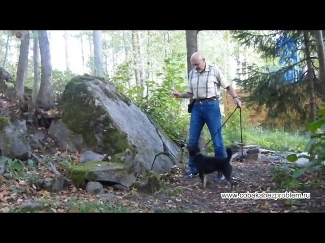 Как дать собаке физическую нагрузку и одновременно сточить когти