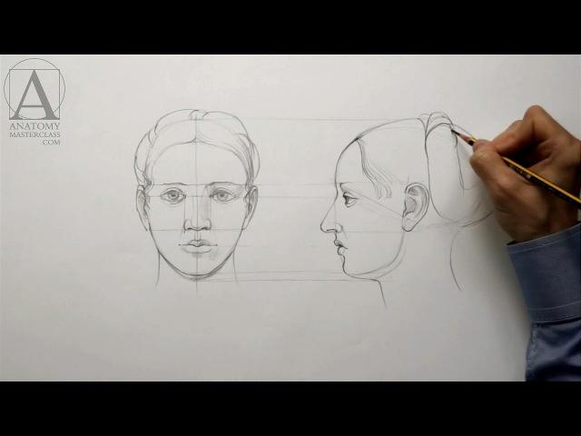 Human Head Proportions Anatomy Master Class