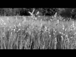 Партизан FM - За лесом солнце просияло