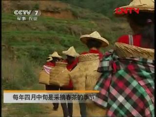 (Красный чай ''Тегуаньинь'' и зелёный чай ''Наконечник Гуаньинь'' - производство с 200-летней историей)