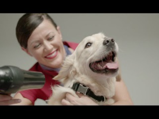 Virgin Australia launches dedicated airport lounge for pets