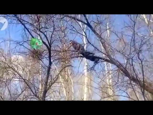 Прикол упал с дерева Серожа ПОКЕМОН ГО POKEMON GO